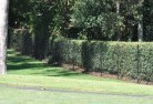 Arcadia South Wire fencing 15